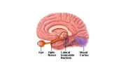 Glaucoma and Brain